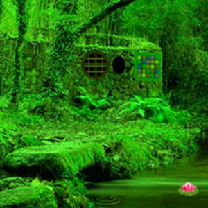 Nature Green Forest Escape